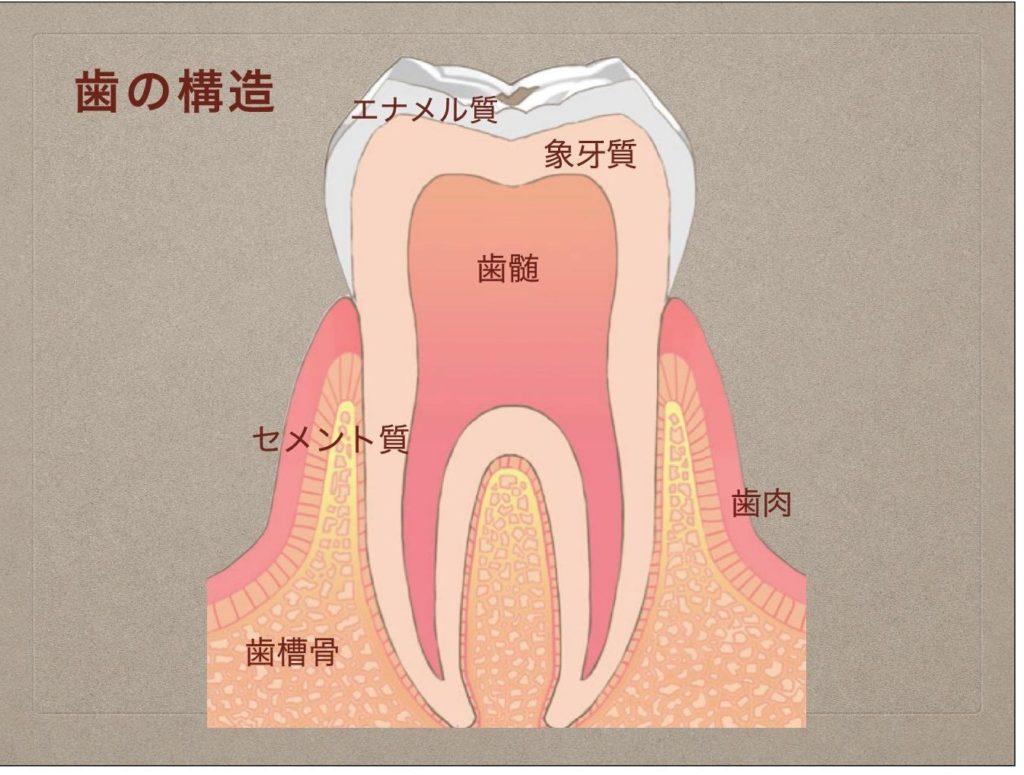 歯周病/むし歯/トゥースウェアー/歯磨き粉